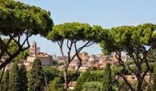I PINI DI ROMA VANNO CURATI CON SISTEMI AGROECOLOGICI E NON CON ENDOTERAPIE